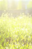 Primavera o estate astratto di natura — Foto Stock