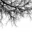 Stock Photo: Tree branches