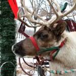Jingle Bell Reinder — Stock Photo