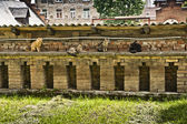 Cats on a wall — Stock Photo
