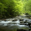 Stock Photo: Tremont at Great Smoky Mountains National Park, TN USA
