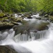 Spring in Tremont at Great Smoky Mountains National Park, TN USA — Stock Photo