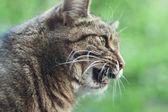 Retrato de gato — Foto Stock