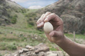 Hand holding an egg — Stock Photo