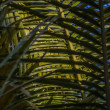 Palm fronds texture — Foto Stock