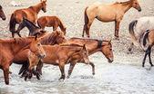 Hästar — Stockfoto