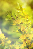 Yellow wildflowers (fragmetn bouquet) — Photo