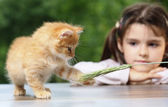 Girl looking at a fluffy kitten — Stock Photo