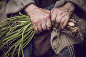 Hands of an old woman holding green onions — Stock Photo