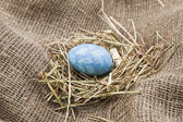 Easter egg — Stockfoto