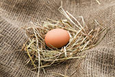 Nest with chicken egg — Stock Photo