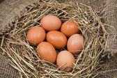 Nest with chicken eggs — Foto de Stock