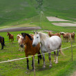 Herd of horses of various colors in the mountains of Italy. — Stock Photo