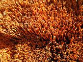 Bir saman çatı kaplama — Stok fotoğraf