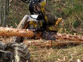 Coupe mécanique des arbres de forêt — Photo