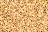 Wheat Texture — Stock Photo
