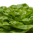 Lettuce Close-up — Stock fotografie
