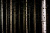 Deep Dark Forest — Stock Photo