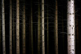 Deep Dark Forest — Stock Photo