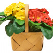 Basket with Flowers with Clipping Path — Stock Photo