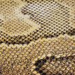 Reptile Texture — Stock Photo #20452825