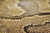 Reptile Texture — Stock Photo