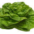 Butter Lettuce with Clipping Path — Stok fotoğraf