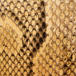 Golden Snakeskin Texture — Stock Photo #21072507