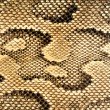 Snakeskin Pattern — Stock Photo