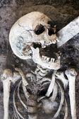 śmiejąc się szkielet — Zdjęcie stockowe