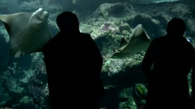 Visitors at the Aquarium — Stock Video
