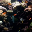 Stock Video: Colorful Fishes