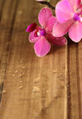 Pink orchids on wood board — Stock Photo