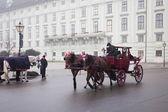 Austia, viyana sokaklarında araba ridding — Stok fotoğraf