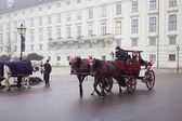 Carriage ridding on the streets of Vienna, Austia — Stock Photo