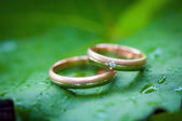 Two wedding rings on a leaf — Stock Photo