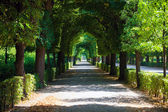 Walkway under a green natural tunnel — Stock Photo