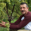 Stock Photo: Smiling wine-grower shows grapes cluster