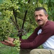 The smiling wine-grower shows grapes cluster — Stock Photo #17163203