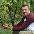 The smiling wine-grower shows grapes cluster — Stock Photo