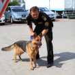 Dog handlers are trained in the customs dogs to look for drugs and weapons - Stock Photo