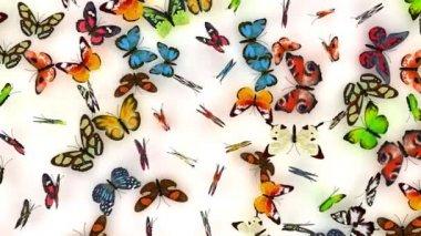 Butterflies background — Stock Video