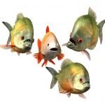 Interview concept, goldfish and piranhas — Stock Photo