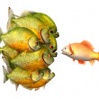 Photo: Persuasion concept, goldfish and piranhas