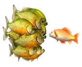 övertalning koncept, guldfisk och pirayor — Stockfoto