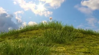 Grassy hill with chamomile and ladybird against the background of time-lapse heaven, beautiful 3d animation — Stock Video