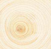 Wood rings — Stock Photo