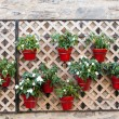 Stock Photo: Hanging Flower Pots