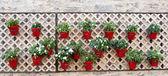 Hanging Flower Pots — Stock fotografie