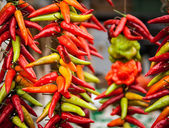 Hot Peppers — Stock Photo